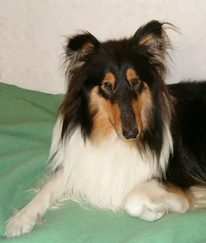 Tessie (Hund: Canis lupus familiaris)