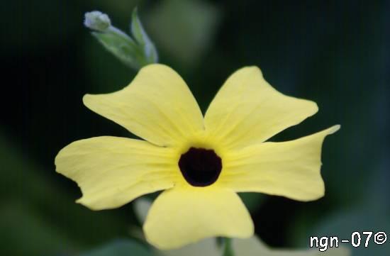 Eden Project, Namn?, England ©NGN-foto