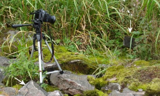Fotografering med fjärrutlösare ©NGN-foto