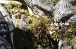 Snok Mellan Nisses Fötter