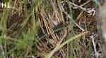 Snok (Natrix natrix) och Huggorma (Vipera berus)
