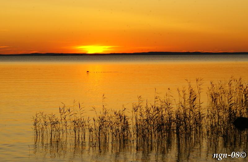 Solnedgång med lyftande fågel