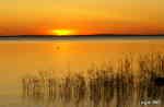 Solnedgång med lyftande fågel.