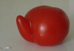 [Bild: Tomat (Solanum lycopersicum [eller Lycopersicon esculentum])]