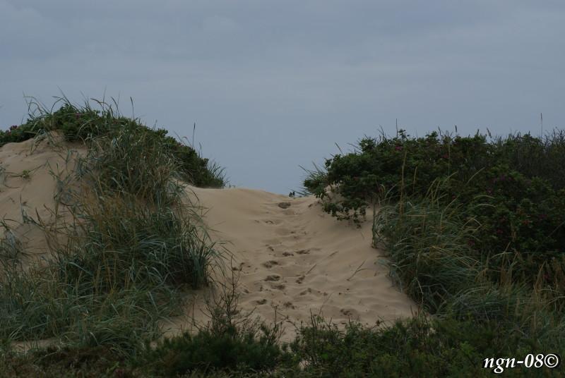 [Bild: Sanddyn. Bl.a hophållen av nyponbuskar.]