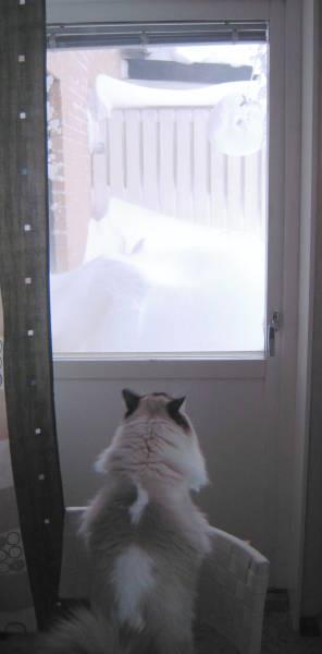 [Bild: Linus kikar på all snö på balkongen]