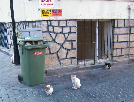 [Bild: Katter]