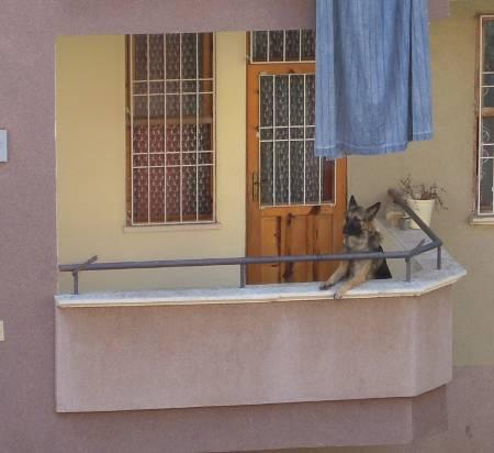 [Bild: Hunden på balkongen]