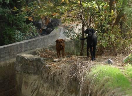 [Bild: 091019 Sällskapshundarna, i Turkiet]