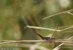 [Bild: Insekt i Turkiet]
