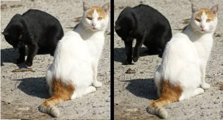 [Bild: Larviga katter i Turkiet]
