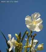 [Bild: Blomma, Alanya,Turkiet]