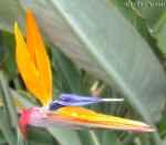 [Bild: Planterad Blomma i Turkiet]