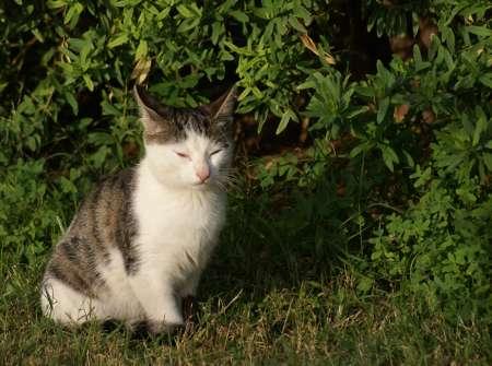 [Bild: Katt, Alanya, i Turkiet]
