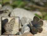 [Bild: Fjäril, i Turkiet]