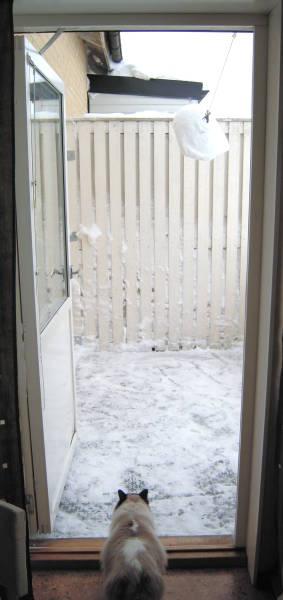 [Bild: Katten Linus spanar in balkongen]
