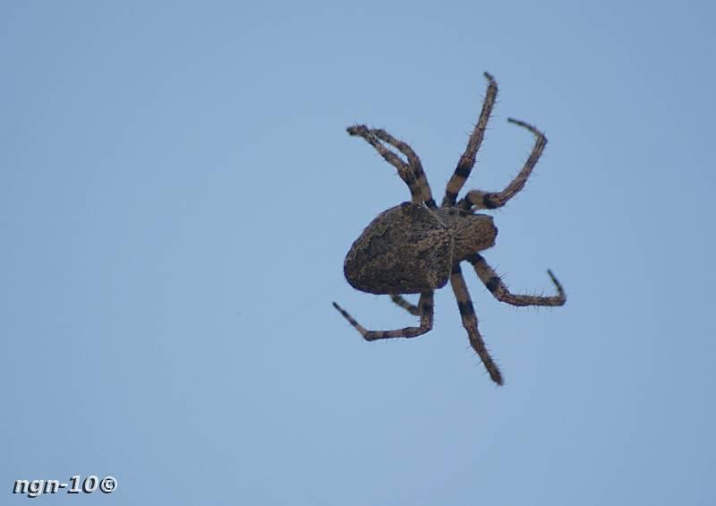 [Bild: Spindel (Inte en susning)]