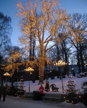 [Bild: Lisebergs ljusbeklädda 'urträd']