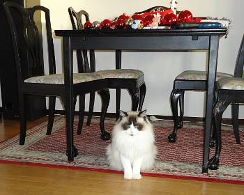 [Bild: Katten Linus]