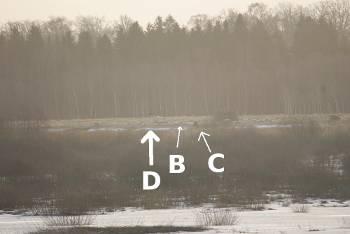 [Bild: Utfodringsplatsen för rovfågel vid Hornborgasjön]