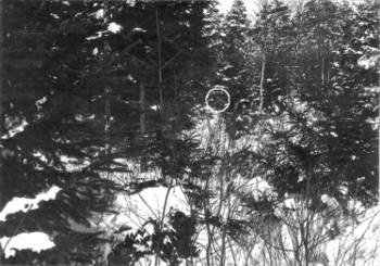 [Bild: Älg, Halleberg, 15 mars 1981]