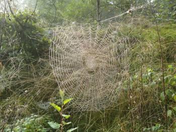 [Bild: Spindelnät]