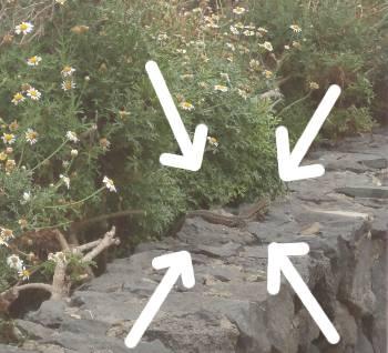 [Bild: En av många tiggande ödlor vid en mur i Pt-Crus]