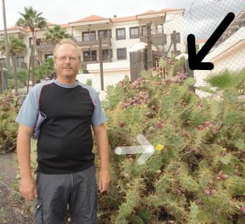 [Bild: Nisse med den lömska kaktusen som nu blommar.]