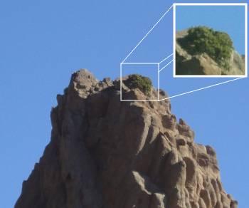 [Bild: Den största lavaformationen - norrifrån, med en buske på toppen!, Teide, Teneriffa]