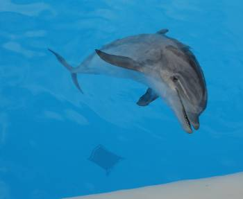[Bild: Nyfiken delfin, Loro Park, Pt Cruz, Teneriffa]
