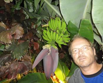 [Bild: Bananfrukter, Parque Carolina, Costa del Silencio,Teneriffa]
