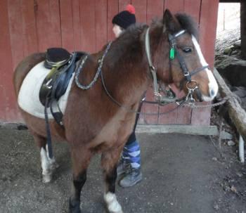 [Bild: Häst, Skansens Gård, Väne-Ryr, Vänersborg]