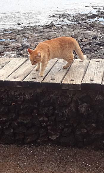 [Bild: Kattkompis, Costa Teguise, Lanzarote]