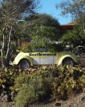 [Bild: Beetlemania, Fuerteventura]