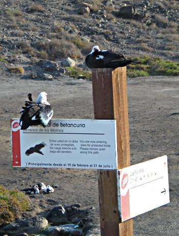 [Bild: Änder, El Puertito de los Molinos, Fuerteventura]