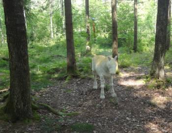 [Bild: En häst?]