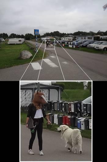 [Bild: Espevik Camping. Hund rastad av hästmänniska.]