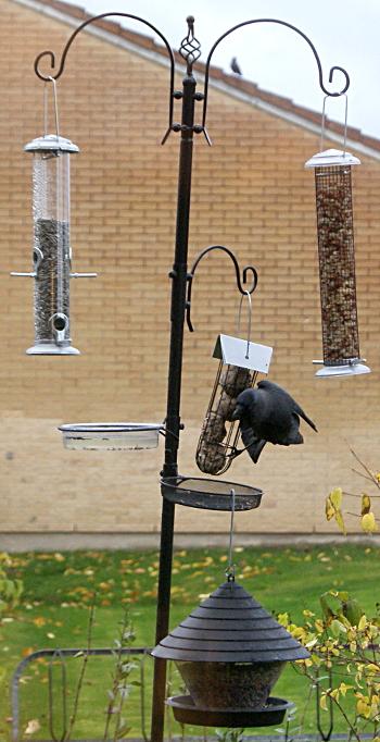 ställning till fågelmatare