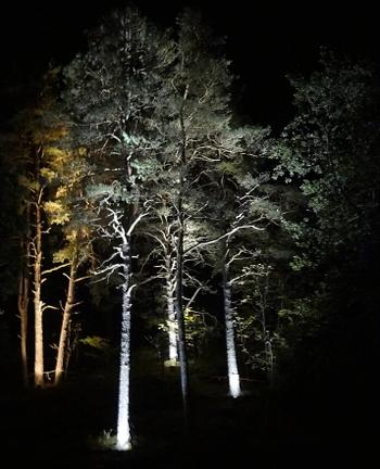 [Bild: Grästorp Ljusfestival vid Nossan Trädbelysning]