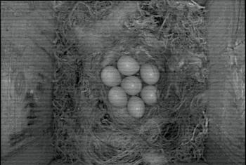 [Bild: 7 ägg]