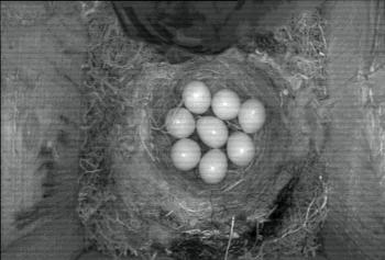 [Bild: Äggen]