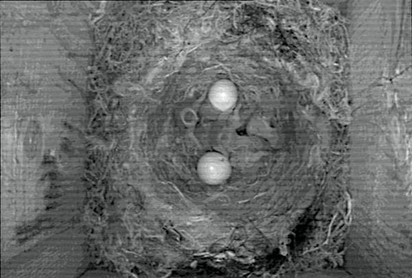 [Bild: 6st ungar och 2st ägg]